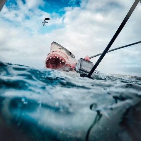 Large_sharkbite